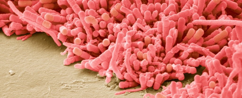 Bacterial Biofilms Have 'Memory' That Works in a Surprisingly Similar Way to Neurons 1