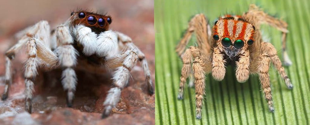 A Bunch of Utterly Adorable New Spiders Have Been Discovered in Australia 1