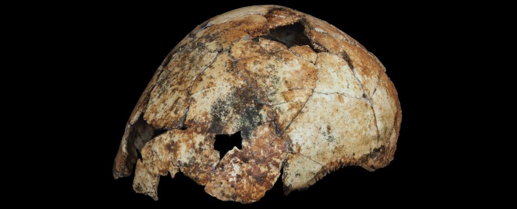 Incredible Fossil Find Hints Homo Erectus Emerged 200,000 Years Earlier Than Thought 1