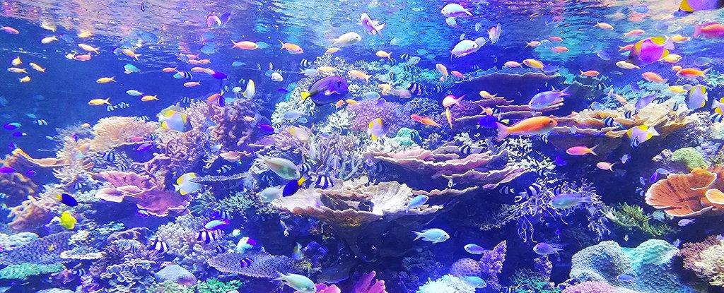 Los científicos acaban de presentar un plan detallado para reponer la vida marina para 2050 2