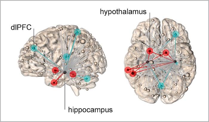 010 stress brain 1