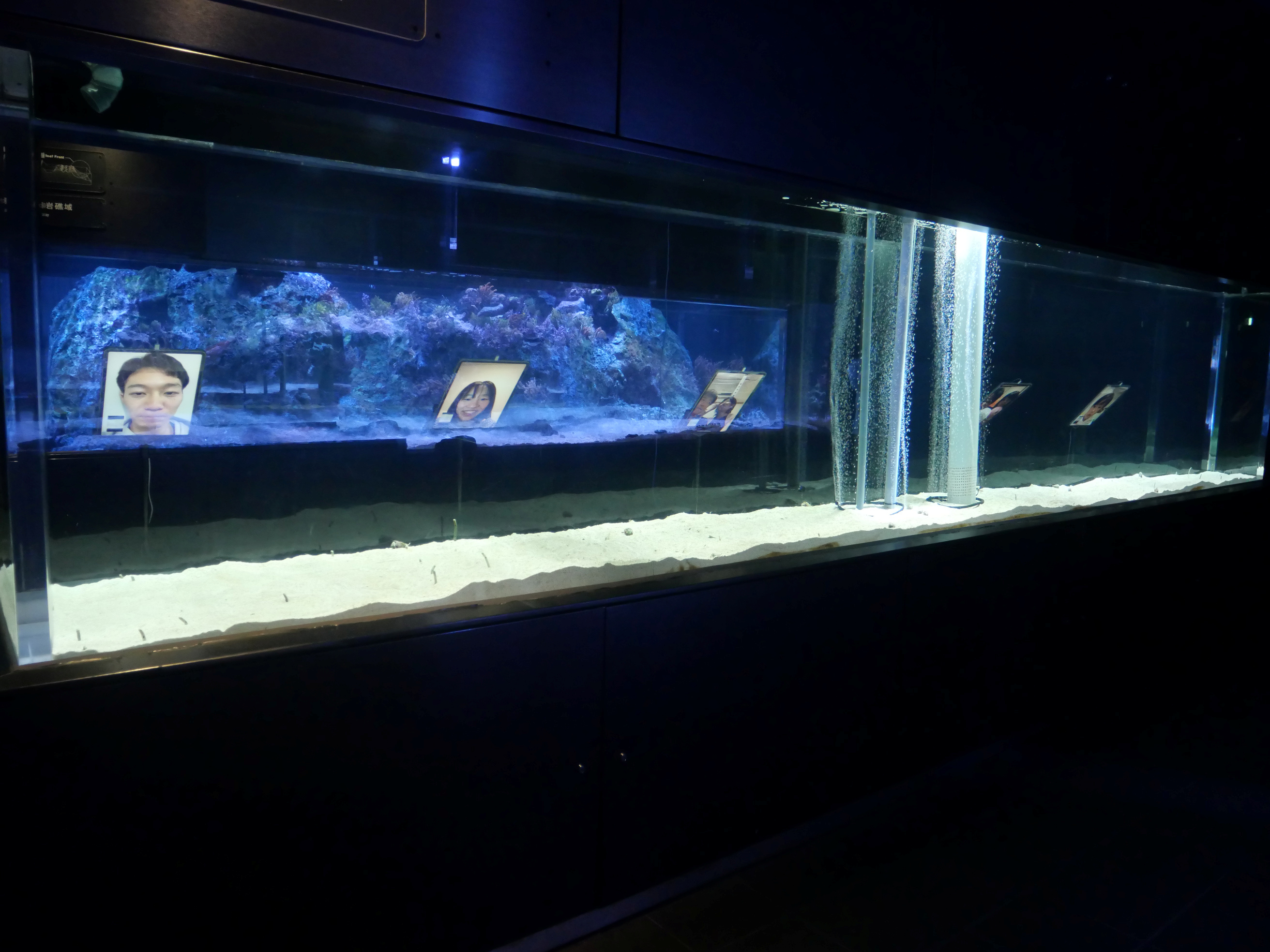 Sumida Aquarium eels. (Reuters)