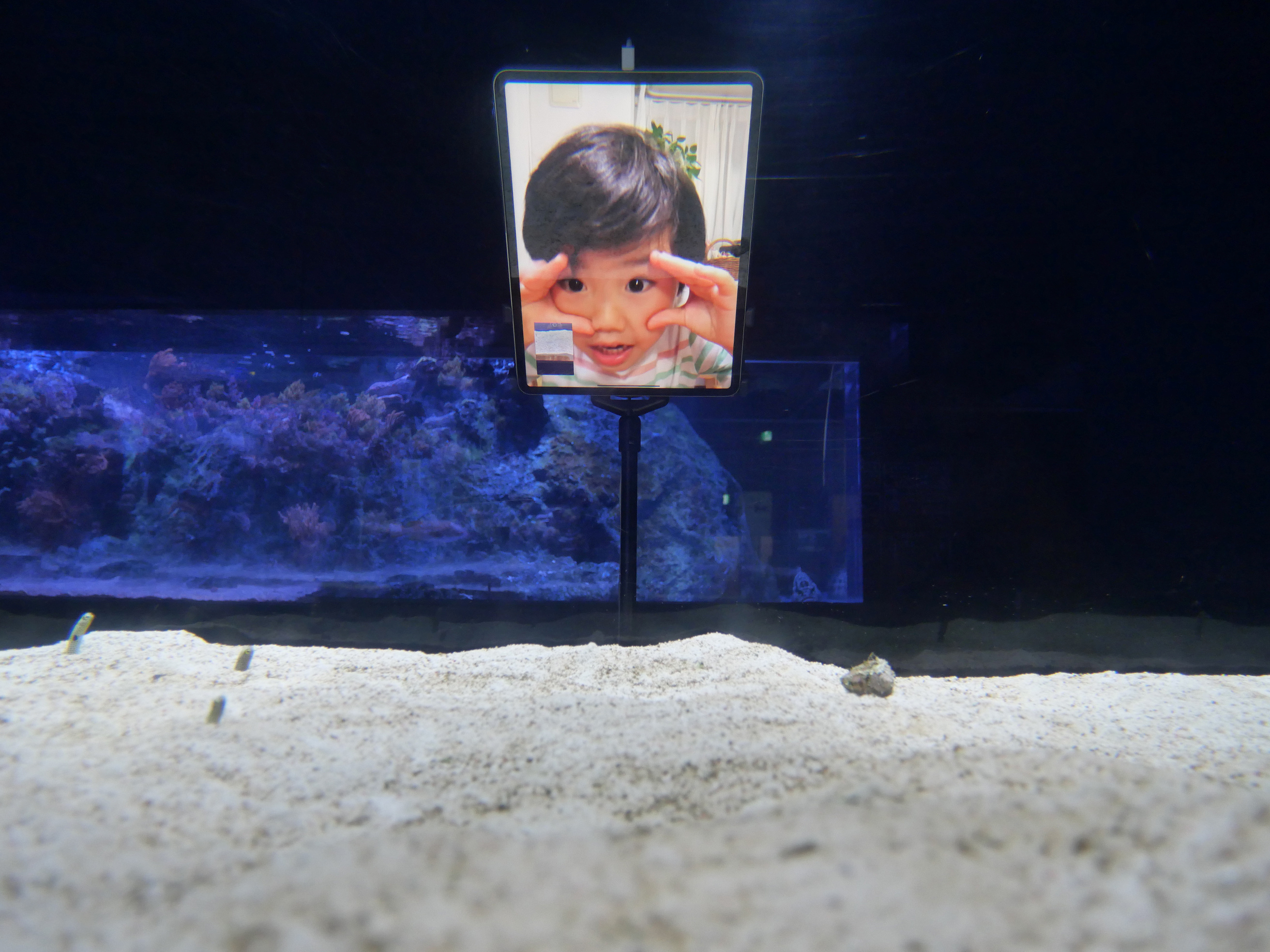 FaceTiming Sumida Aquarium eels. (Reuters)