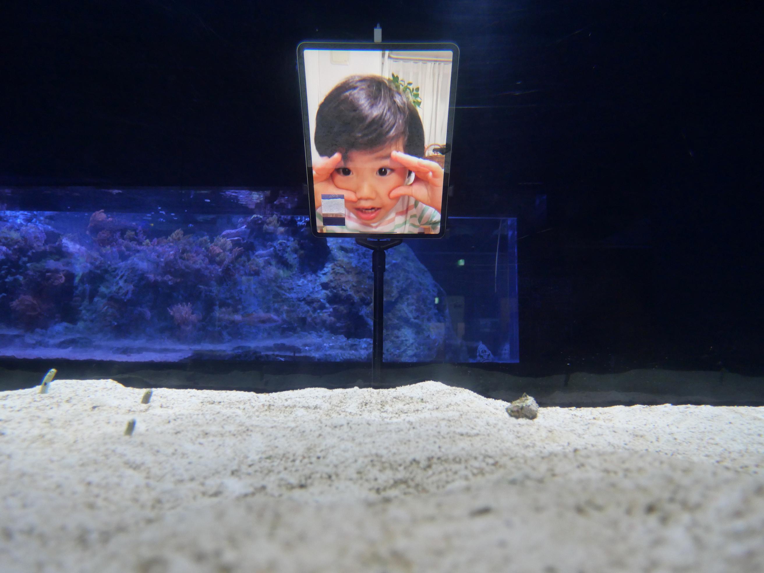 FaceTiming Sumida Aquarium eels. (Reuters)