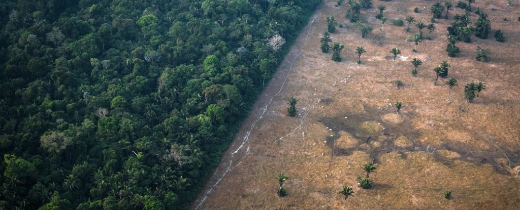 The Amazon Could Easily Be The Next Source of Coronaviruses, Scientist Warns