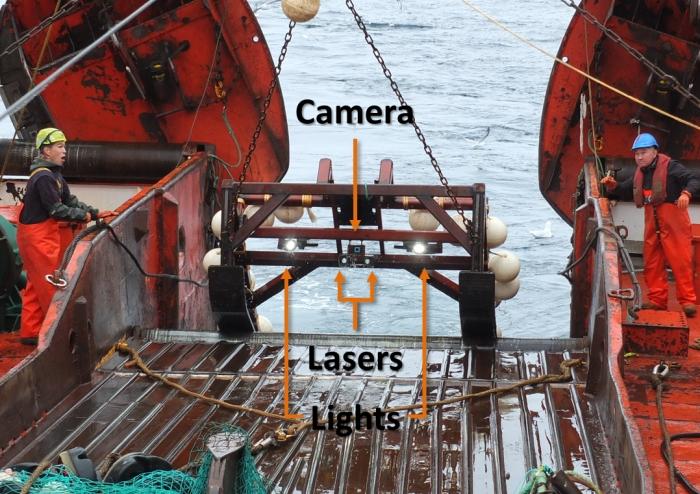 Deep sea camera rig