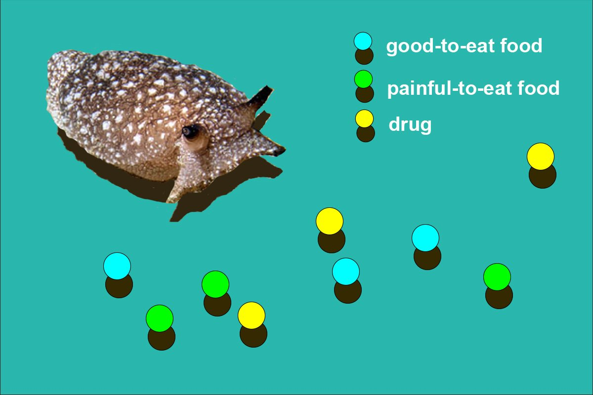 Scientists Simulated a Sea Slug to Study Decision Making. Then It Got Addicted to Drugs
