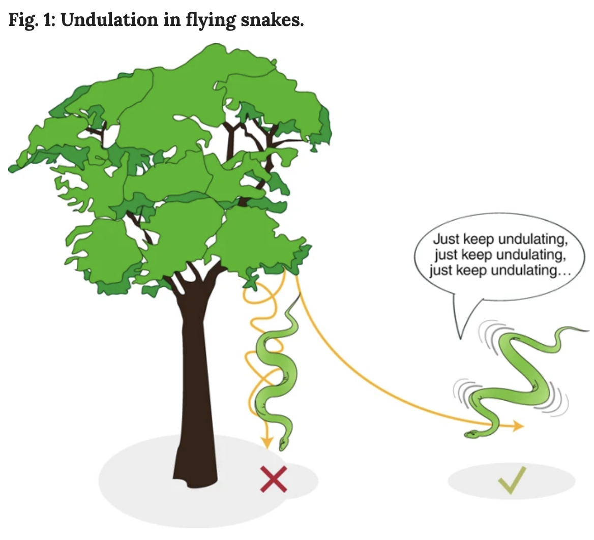 The Bizarre 'Flight' of Tree Snakes May Have Just Been Explained by Physics