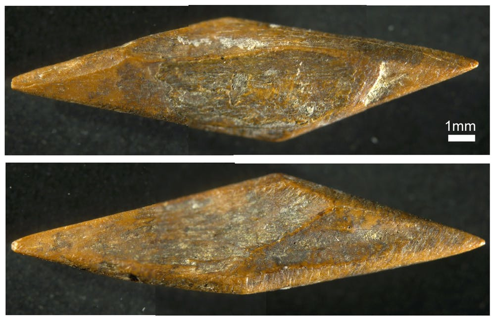 Oldest Arrowheads Outside of Africa Have Been Found in The Rainforests of Sri Lanka