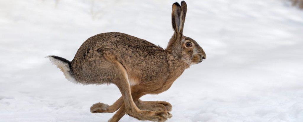 A Deadly Rabbit Virus Nicknamed 'Bunny Ebola' Is Spreading Rapidly in Southwestern US