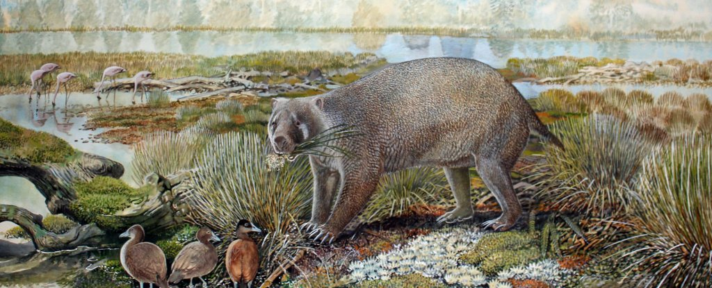 Gigantic wombat-like creature weighing over 300 pounds roamed prehistoric Australia