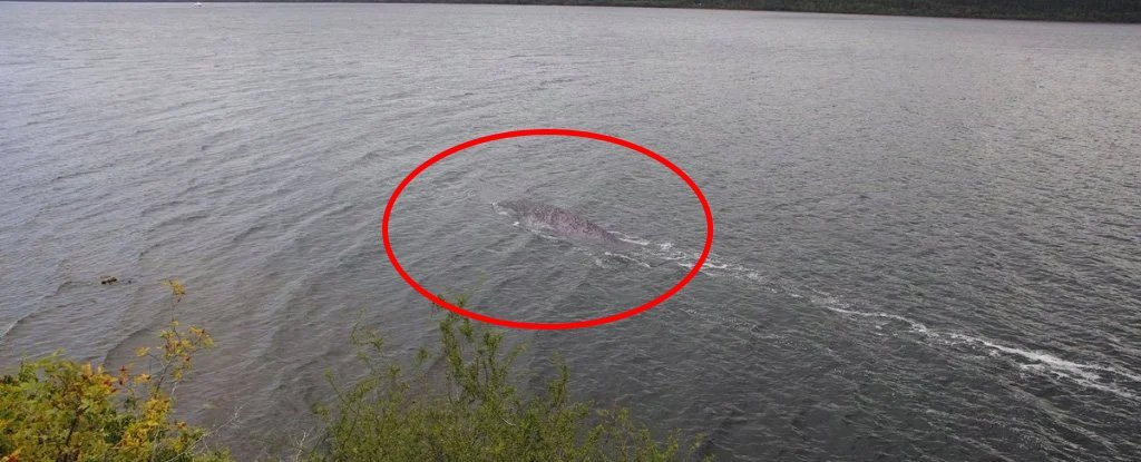 There's a New Photo Circulating of The Loch Ness Monster, But Guess What