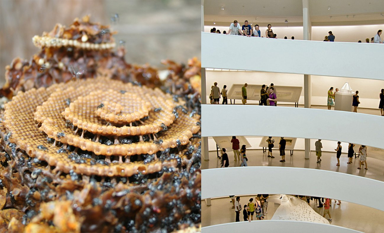 bee spiral vs guggenheim