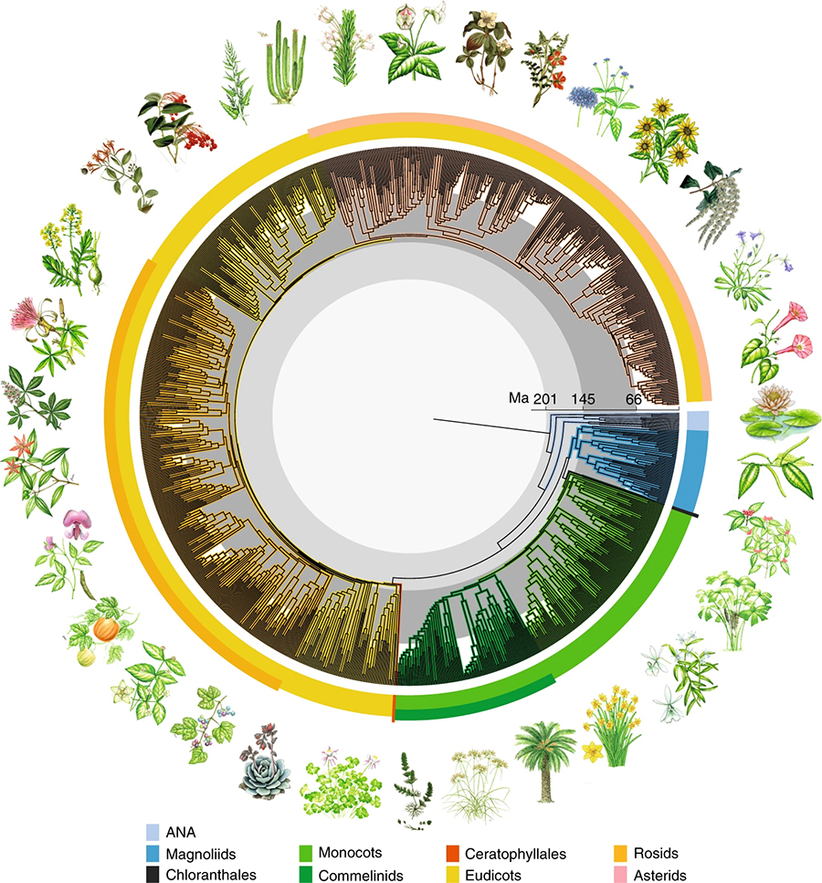 Scientists Create a 'Time Tree' Showing How Flowering Plants Came to Dominate Earth