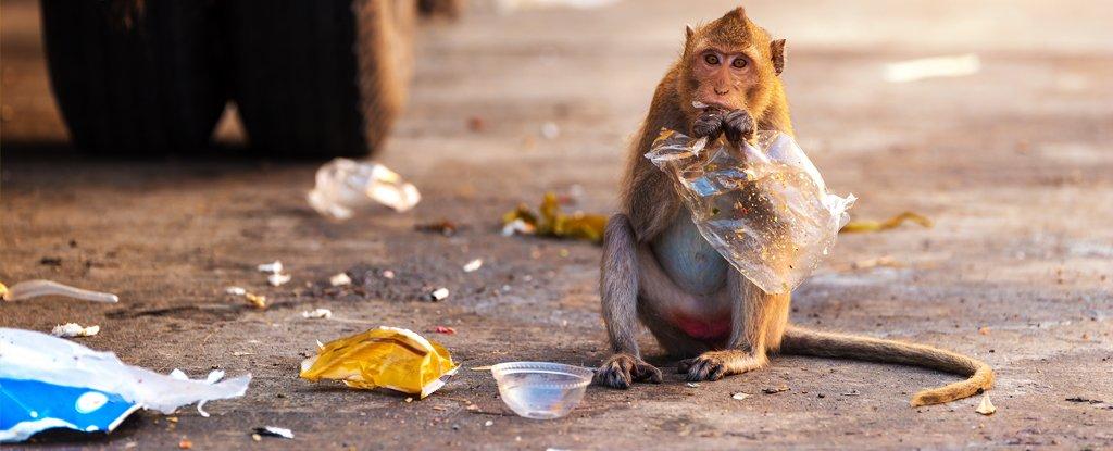 Plastic waste on animals