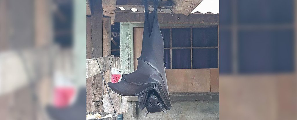 Here's What You Need to Know About That 'Human-Sized' Bat Going Viral