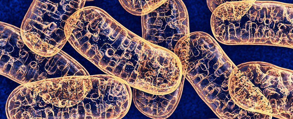 For The First Time, Scientists Find a Way to Make Targeted Edits to Mitochondrial DNA - ScienceAlert