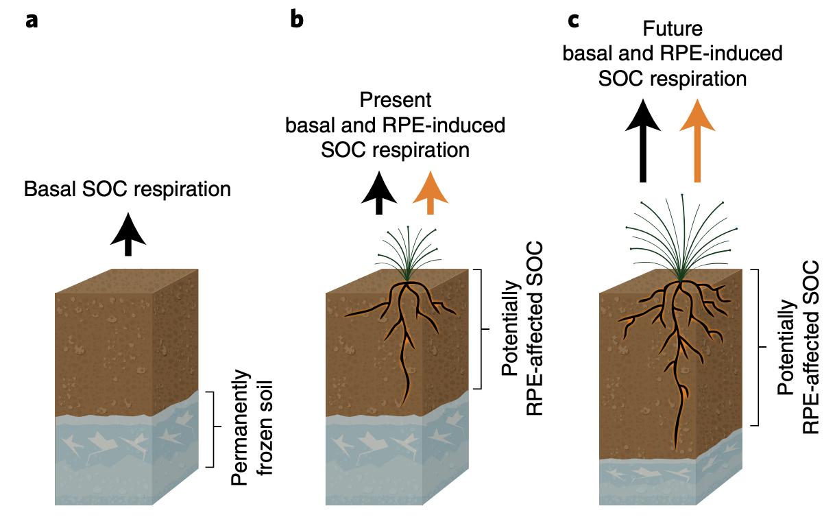 soilmicrobes