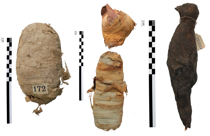 New X-Ray Imaging Has Revealed What's Inside Ancient Egyptian Animal Mummies