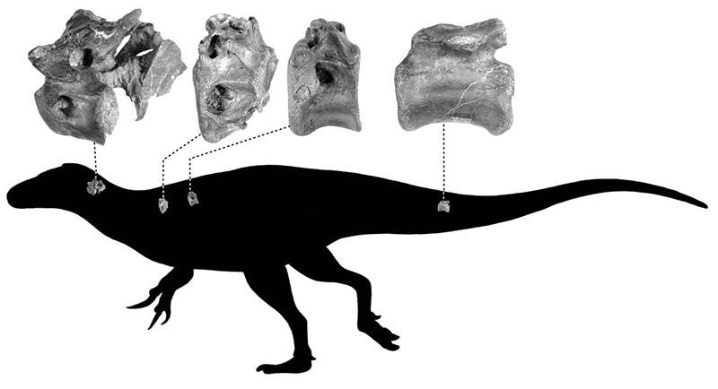 Palaeontologists Discover a New Species of Dinosaur on The Isle of Wight
