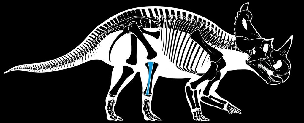 Malignant bone cancer has been diagnosed in a dinosaur for the first time ever