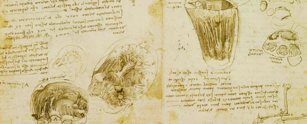 Leonardo Da Vinci's drawing of cardiac anatomy