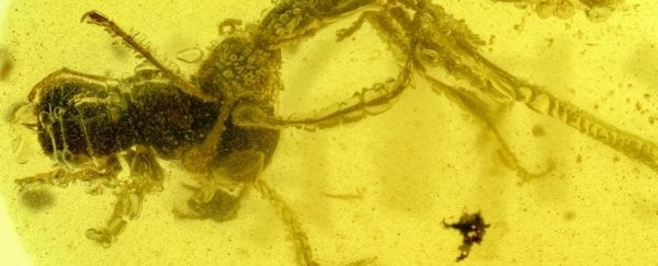 Prehistoric 'Hell Ant' Stuck in Amber Has Been Mauling Its Prey For 99 Million Years