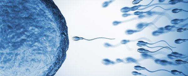 We Thought We Knew How Sperm Swam, But It Was Just an Optical Illusion