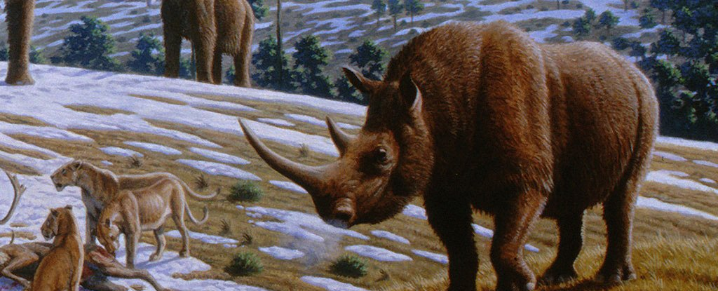 We May Finally Know What Killed The Woolly Rhinos, And It Wasn't People - Armenian Reporter