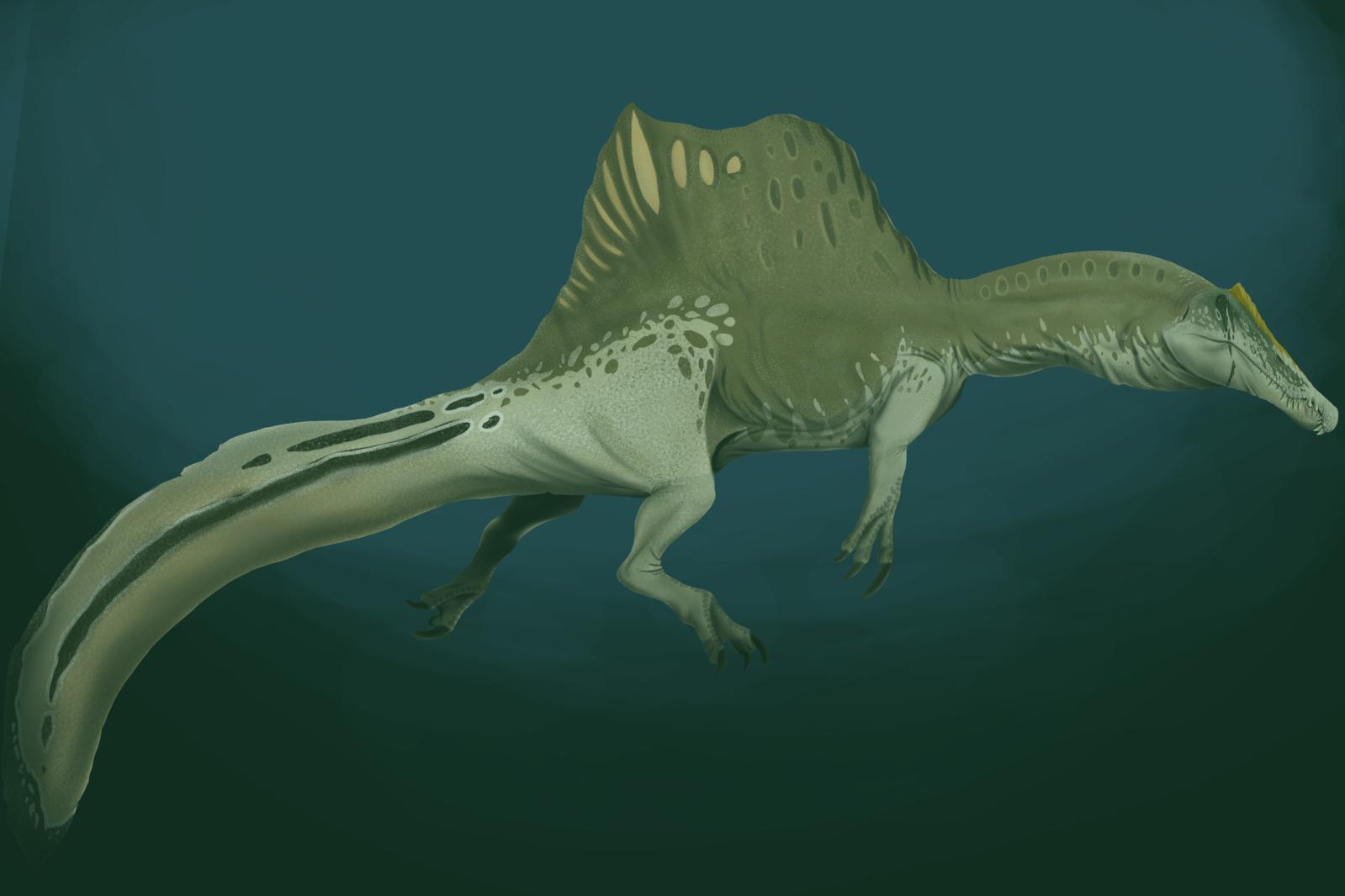 1599px Spinosaurus aegyptiacus underwater