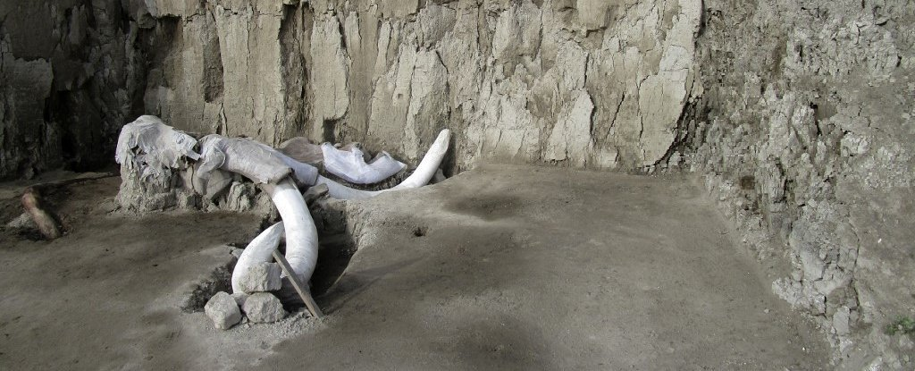Hundreds of Mammoth Bones Have Been Found Under The Site of a Future Mexican Airport