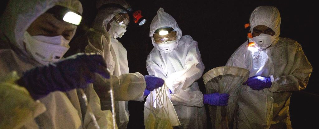 Scientists collect bats for coronavirus research on 12 September 2020 in Ratchaburi, Thailand.