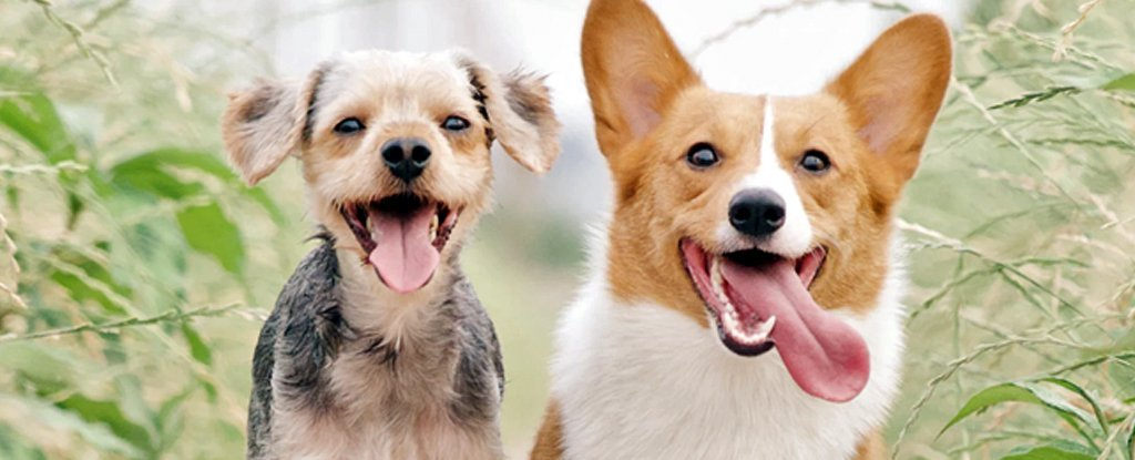 These 3 Recent Studies Radically Change What We Understand About Dogs