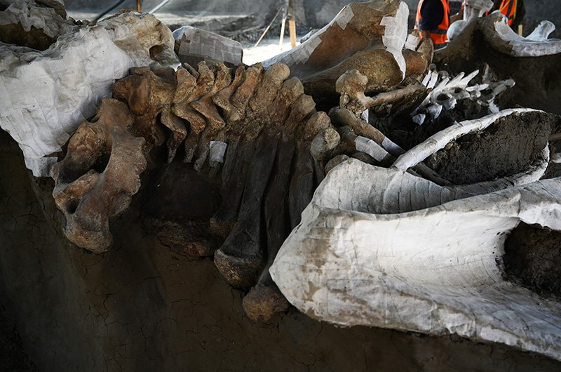 mammoth bones body 2