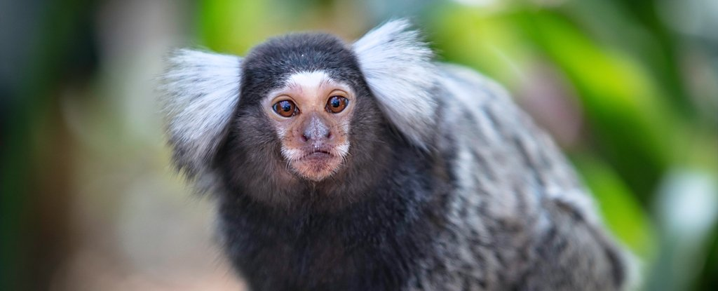 Monkeys May Have Self-Domesticated Just Like Humans Did, Study Suggests