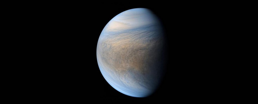 Venus Might Have Been a Temperate Habitable World if It Wasn't For Jupiter