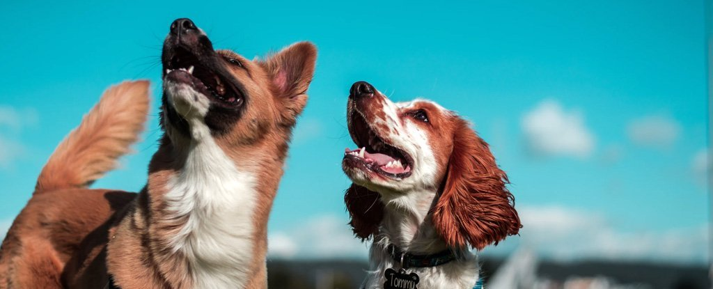 Our Canine Best Friends Were Surprisingly Diverse Already 11,000 Years Ago