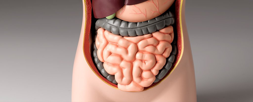 Mouth Bacteria Have Been Linked to Severe Forms of Inflammatory Bowel Disease