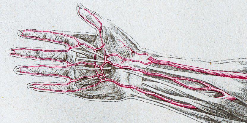 median artery persist body