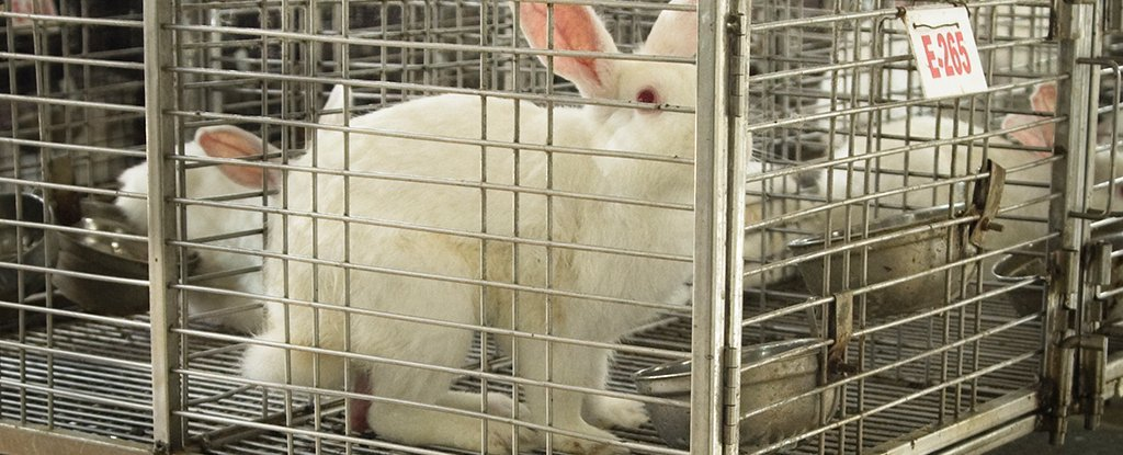 It's Bad That Most Animals Used in Experiments Never Appear in Published Research