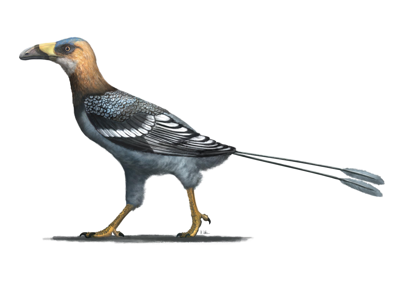 1 birdwithtall