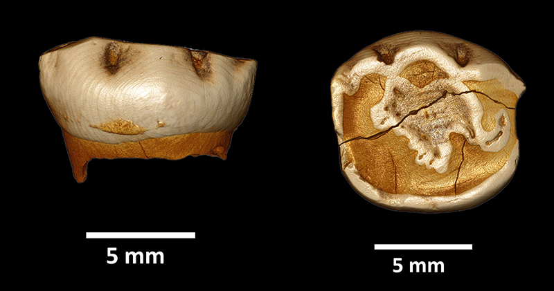 Neanderthal Children Grew Up And Were Weaned in a Similar Way to Humans