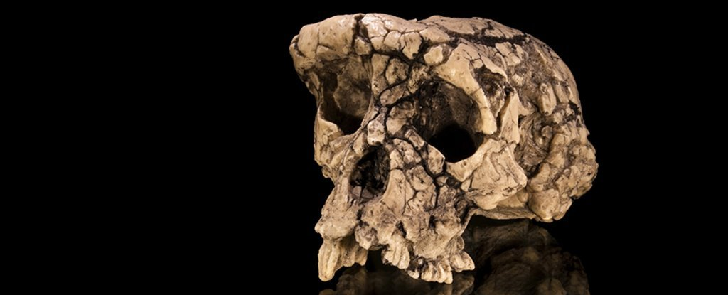 Controversial 7-Million-Year-Old Skull May Not Have Been as Human as We Thought