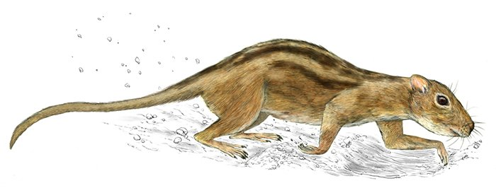 Scientists Just Found The Earliest Evidence of Social Behaviour in Mammals