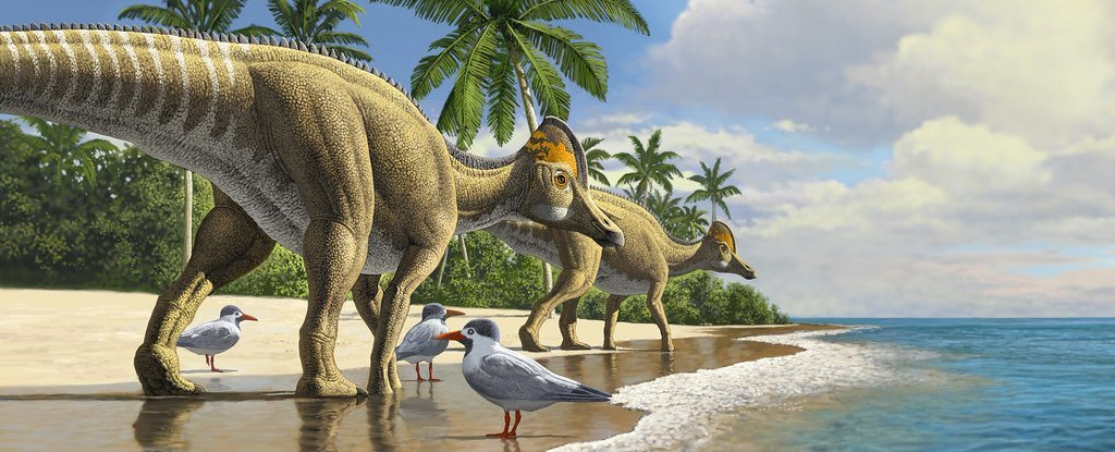 The Fossil of a Duckbill Dinosaur Has Been Found on The 'Wrong' Continent – ScienceAlert