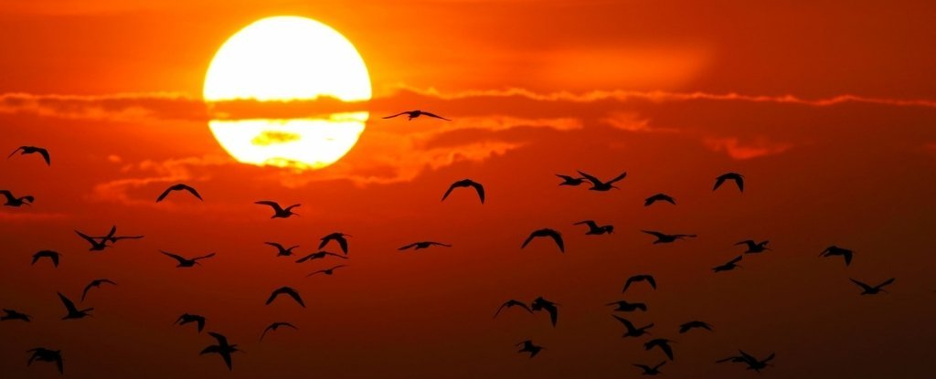 Birds Appear to Beat The Heat Stress of Climate Change Better Than We Thought