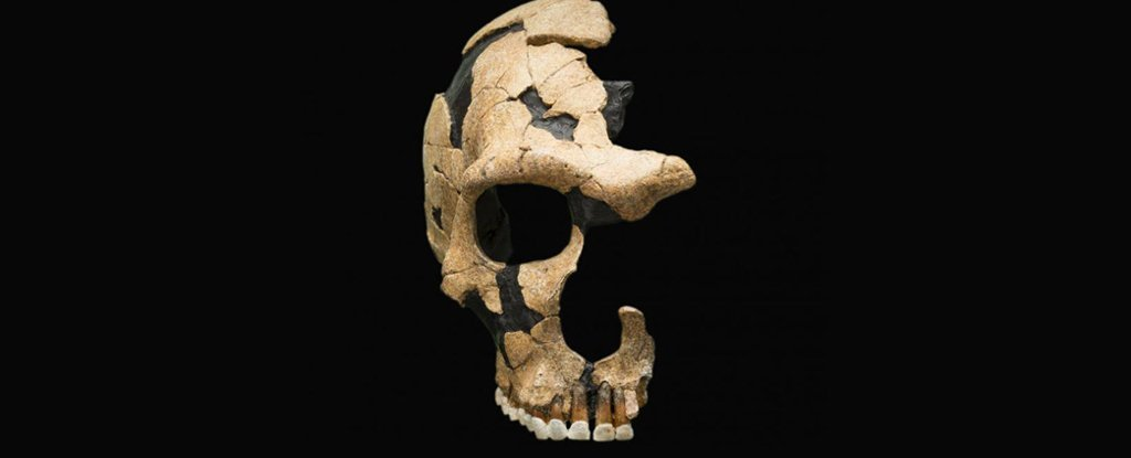 The Saint-Césaire Neanderthal skull suffered a blow that split the skull.