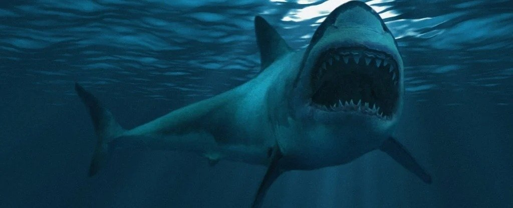 What Sealed The Fate of The Giant Megalodon? Its Ancient Teeth May Reveal The Answer