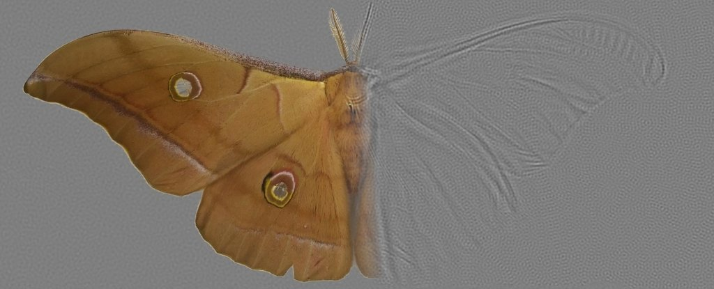 Moth Wings Have Evolved a Rare 'Metastructure' We've Been Trying to Make in The Lab