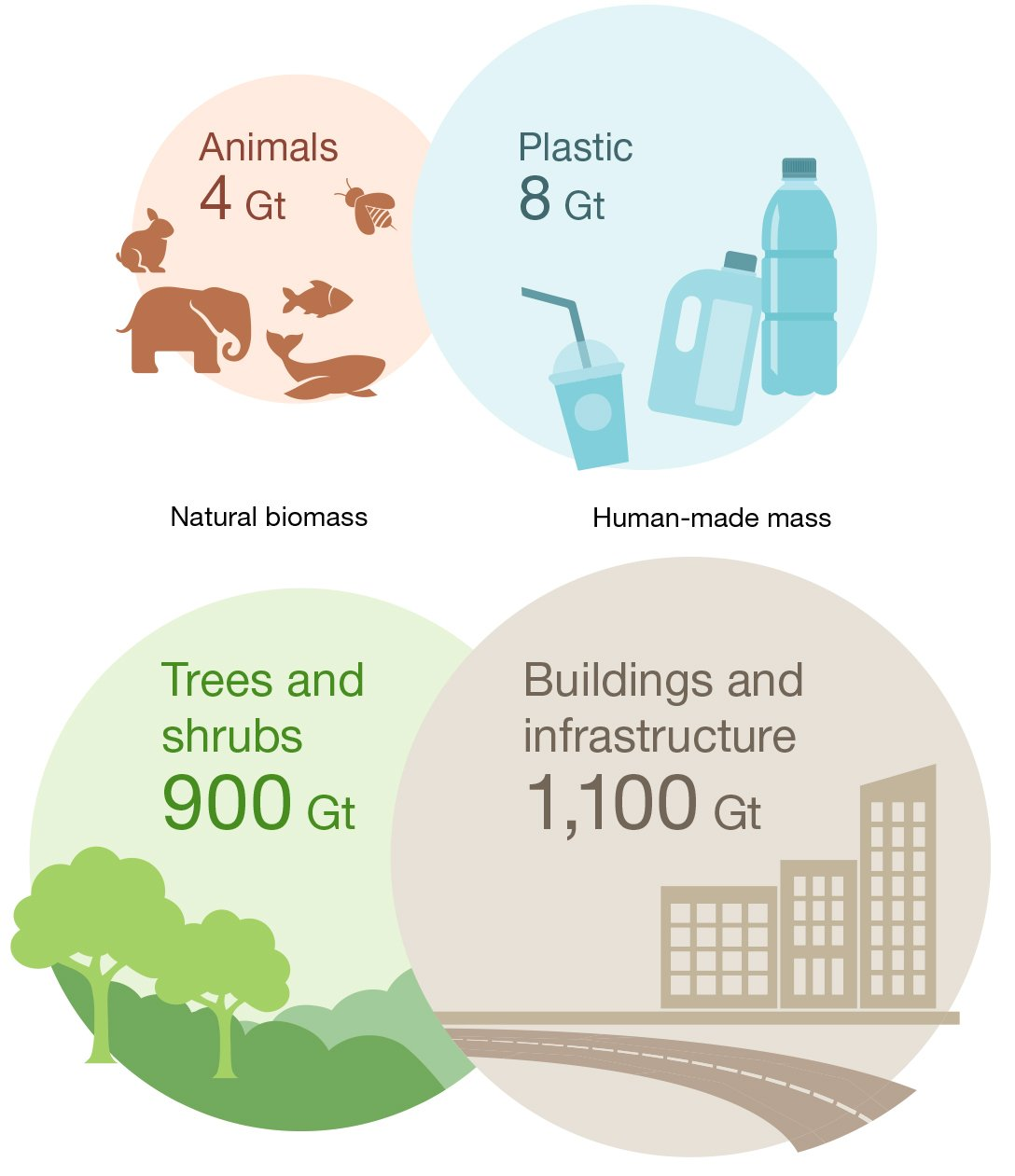 biomass of plants and animals compared with plastic and construction mass